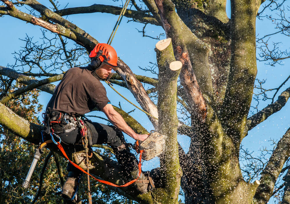 Tree Surgeon in Kent
